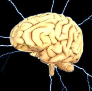 Beynin Bölümleri ve Görevleri Nelerdir?