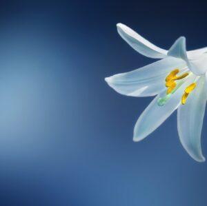 Soru 16: Gerçeğinden Ayrılmayan Canlı Çiçek Resmi Nasıl Yapılır?